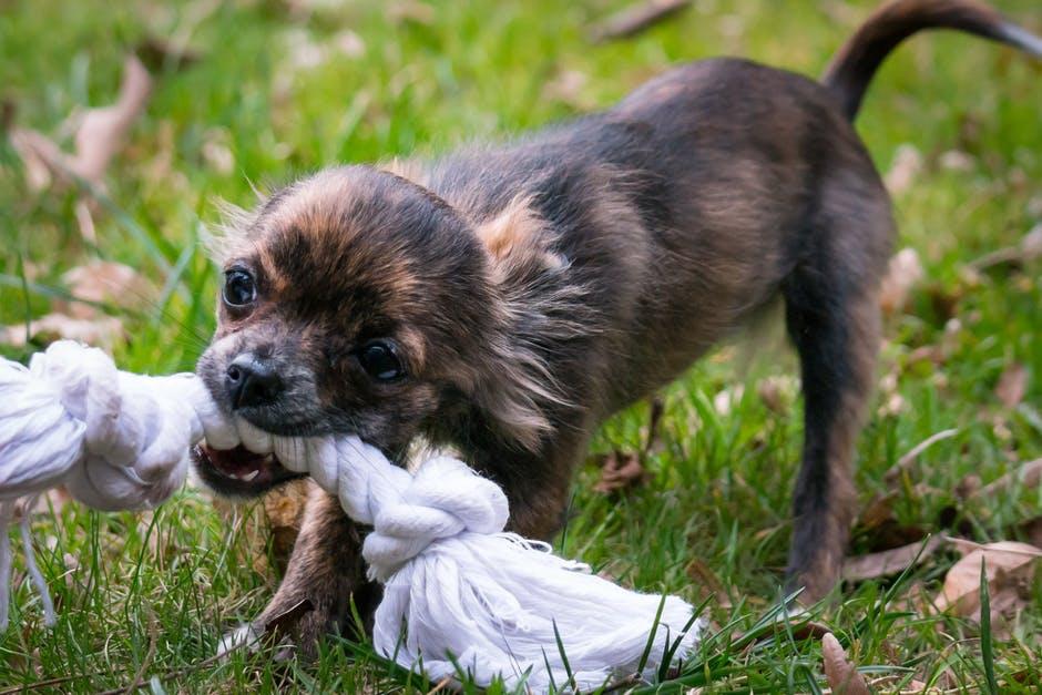 bezpański pies może być bardzo groźny