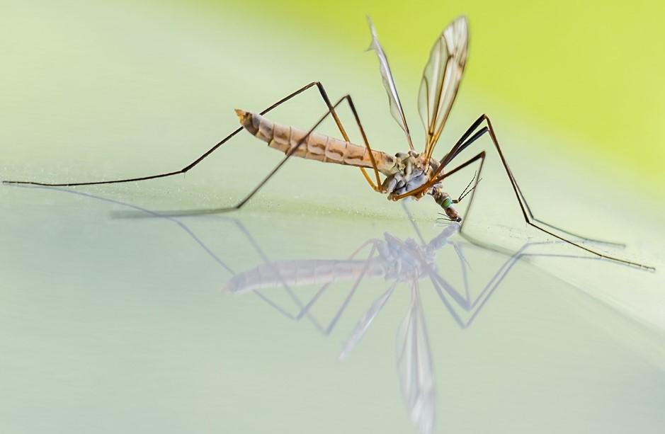 Najlepsze preparaty na komary